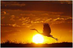 Sunset in Chobe, Botswana. By Marius Coetzee