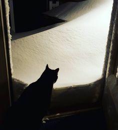 Yeah nope! #fuckthat #stayinside #zeus #zeusy #snowmageddon #snowzilla #snow #cats #catsofig #meowsohard by theobtusezeus
