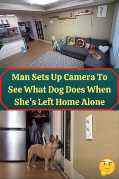 #Man #Camera #See #Dog #Left #Home #Alone She's Leaving Home, Surprises For Her, What Dogs, Colorful Eye Makeup, Acrylic Nail Designs, Acrylic Nails, Man Set, Home Alone, Bathroom Renovations