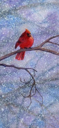 CARDINAL 3 bird nature watercolor painting -- Barbara Fox
