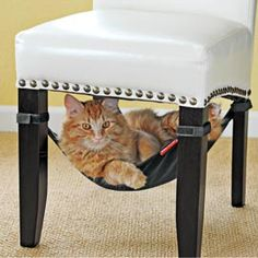 For all you cat lovers!    Cat Crib, Cat Bed, Cat Hammock, Chair Sling for Cat | Solutions