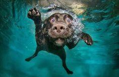 5 Amazing dog photographs under water :)