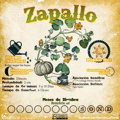 Organic Supplies, Aquaponics, Growing Vegetables, Herb Garden, Container Gardening, Vintage World Maps, Flora, Herbs, Garden Projects