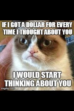 Grumpy Cat. If I got a dollar for every time I thought about you, I would start thinking about you.
