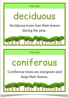 Habitats Fact Cards - Treetop Displays - A set of 48 fact cards that give fun… Rainforest Theme, Amazon Rainforest, Key Stage 2, Forest Habitat, Science Activities, Science Ideas, Primary School Teacher, Creative Curriculum, Outdoor Learning