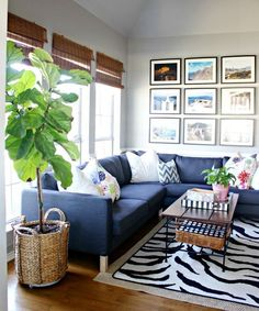 Eclectic Home Tour of High Sugarplum - Fun, colorful and eclectic family room - love the blue sectional sofa, vacation photo gallery wall and fiddle leaf fig eclecticallyvintage.com
