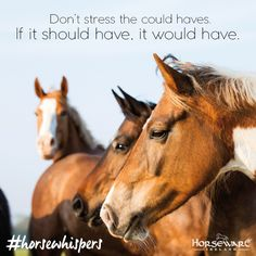 #horseware #horsewhispers #truth #inspiration #equestrianlife