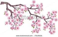 Cherry blossom branch Stock Photos, Cherry blossom branch Stock Photography, Cherry blossom branch Stock Images : Shutterstock.com
