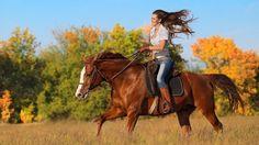 Картинки по запросу семейная фотосессия с лошадьми