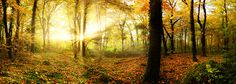 Autumn forest with sun rays
