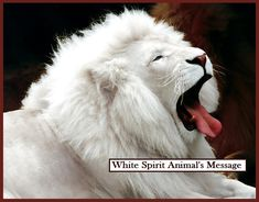 White lion--Like tigers, individual lions are sometimes born with white coloring.This mutation is not an albino, but a rare color mutation of the Kruger species of lion. Tier Wallpaper, Animal Wallpaper, Wallpaper Gallery, Trendy Wallpaper, Unusual Wallpaper, Wildlife Wallpaper, Windows Wallpaper, Wallpaper App, White Wallpaper
