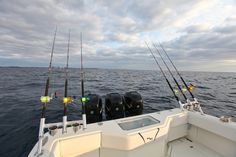 Reels packed with Momoi's Hi-Catch