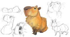 Capybara warmups from earlier