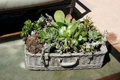 If you're looking for some creative ways to plant succulents, you've come to the right place. Turns out, you can plant them just about anywhere!