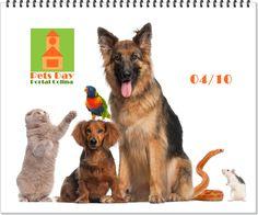"""Pets Day  - Dia dos AnimaisEnvie as fotos do seu pet para para """"Pets Day"""" acesse aqui http://www.portalcolina.com/eventos/pets-day-dia-dos-animais.html"""