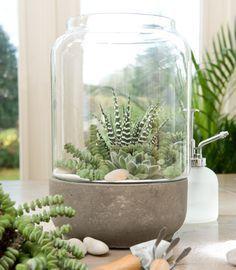 Leuk! Een klein mini tuintje in huis. In 5 eenvoudige stappen maak je hem, heel eenvoudig. Met stoere vetplantjes, een windlicht en decoratiesteentjes. Bekijk de stappen hieronder en ga meteen aan de slag. Veel plezier…