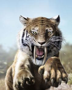 Siber tooth tiger by Jubran on DeviantArt