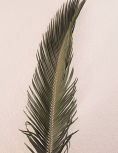 sfgirlbybay / bohemian modern style from a san francisco girl Palm Tree Leaves, Plant Leaves, Tropical Leaves, Palm Trees, Sago Palm, San Francisco Girls, Flower Boutique, Dry Plants, Ideas