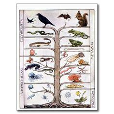 Ernst Haeckel Animal Tree T-shirt Colorful Version Shirt Print Design, Tee Design, Shirt Designs, Graphic Design, Vintage Shirts, Vintage Tops, Science Tees, White Shirts, Printed Tees