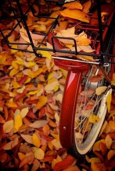 autumn.quenalbertini: Fall leaves and bicycle | This Ivy House