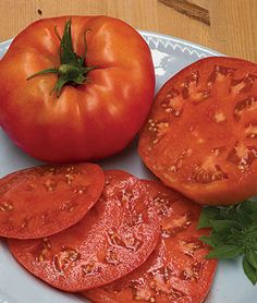 Grow robust tomato plants with Burpee's high yield tomato seeds today. Shop quality beefsteak, cherry, slicing, paste, and heirloom tomato seeds for sale. Find over 100 types of tomato seeds & plants for sale at Burpee. Organic Mulch, Grow Organic, Different Types Of Seeds, Growing Tomatoes In Containers, Grow Tomatoes, Cherry Tomatoes, Beefsteak Tomato, Tomato Farming, Tomato Seeds