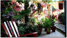 Casa Yolanda y Tomás, jardín. Vinales, Cuba, Plants, Terrace, Entryway, Gardens, Plant, Planets