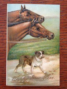 Gorgeous Embossed Vintage 1907 New Year's Postcard, Horses & Bull Dog Terrier