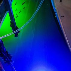 illumisea_aquatic_lights If you are ever in the Florida Keys you have to swing by #pilothousemarina & IllumiSeau0027s Underwater Dock Lights are superior! This is our Mega ...
