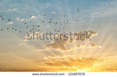 Sunrise with birds flying - stock photo