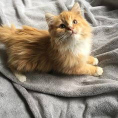 The Friendly and Loving Orange Cat - Cats In Care Pretty Cats, Beautiful Cats, Cute Kittens, Cats And Kittens, Cat Reference, Gatos Cats, Photo Chat, Man And Dog, Red Cat