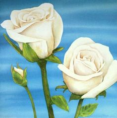 Luffarelli-Rose-bianche-Rosen-Fertig-Bild-50x50