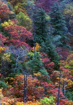 ✯ Fall Colors Forest - Old Rag Mountain - Shennendoah National Park, Virginia
