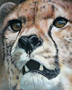 Untitled © Elize Bezuidenhout Acrylic on canvas This was the first cheetah she painted 2008 Wildlife Paintings, Wildlife Art, Animal Paintings, Animal Drawings, Acrylic Paintings, Big Cats Art, Cat Art, Africa Painting, Color Pencil Art