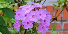 Photosop entre todos: Flor de verano