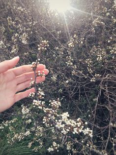 Speed Well and Stay Safe: Identifying Wildflowers in March | Wild Library Cream Flowers, Blue Flowers, Woodland Flowers, Spring Activities, Plant Species, Trees And Shrubs, New Leaf, Small World, Stay Safe