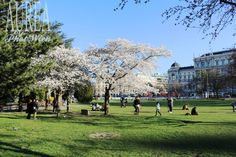 It's Springtime in Vienna Vienna, Spring Time, Dolores Park, Travel, Viajes, Traveling, Tourism, Outdoor Travel