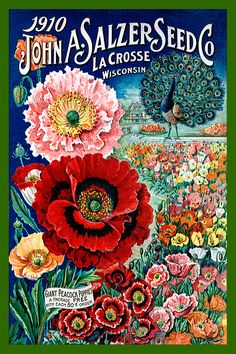 Salzer Seed Catalog cover 1910 in a set of 4-4x6 quilt blocks by American Quilt Blocks. Ferry Seed Packet 1889 in a set of 4-4x6 quilt blocks by American Quilt Blocks. Vintage image printed on cotton. Ready to sew.  Single 4x6 block $4.95. Set of 4 blocks with pattern $17.95.