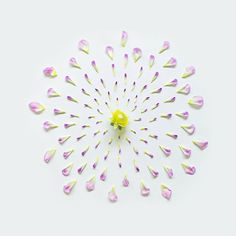 Excellent Arrangement of Exploded Flowers | Incredible Snaps