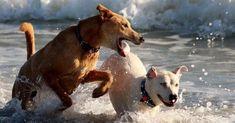 Descubre los beneficios del agua de mar para mascotas
