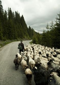 Traffic Jam in Bucovina - photo by Mihai Joimir