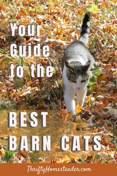 Cats play a vital role on a homestead, helping to keep the rodent populations under control. Just as I would want a valued employee to stick around for a long time, I want my barn cats to stick around and continue doing a great job for a long time. #barncats #homesteadcats Rodents, Gardening Tips, Homesteading, Barn, Barns, Shed