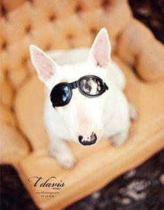 Bull Terrier SOOOOO cute