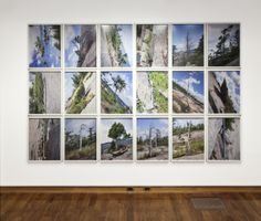 Andrew Wright, Tree Corrections, 2013, 18 Chromogenic Prints, 18x24 inches each (photo credit: Toni Hafkenscheid)