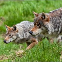 They mate for life unlike most humans and yet we feel the right to kill them. IRONIC isn't it!