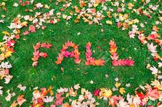 The words Fall written with red leaves Stock Photo - 32380196