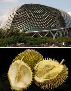 DP Architects and Michael Wilford hosts an elaborate skin inspired by the Durian plant. The external shading system is also responsive in that the triangular louvers adjust during the day to the suns angle and position. Biomimicry Architecture, Art Et Architecture, Futuristic Architecture, Sustainable Architecture, Sustainable Design, Genius Loci, Dp Architects, Architecture Organique, Biomimicry Examples
