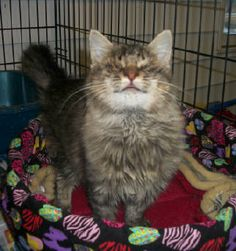Snicker, Blind cat and he is so cute and Loving