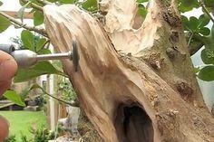 deadwood_techniques13