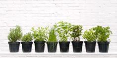 How to Grow an Herb Garden - Herb Growing Chart