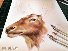 Elk Progress Onto the fur and then the horns! Drawn with @TombowUSA Irojiten colored pencils, Woodlands Dictionary Set.